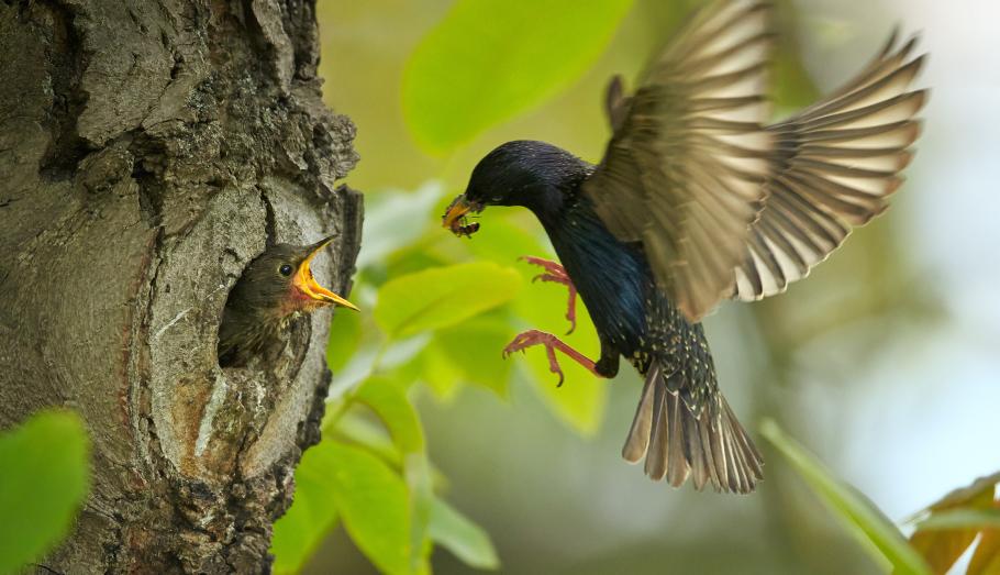 birds-in-nest