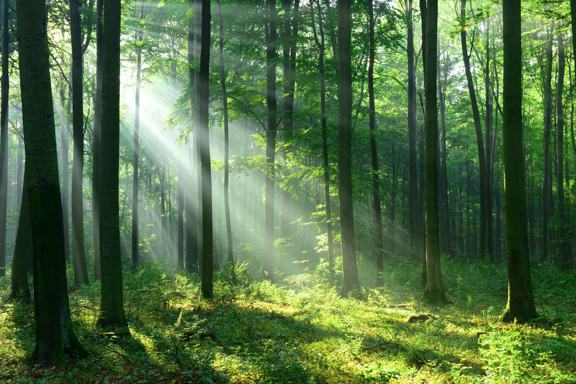 green-tree-forest